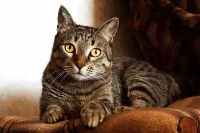 Ottieni fino a 3 preventivi per la cremazione del tuo gatto